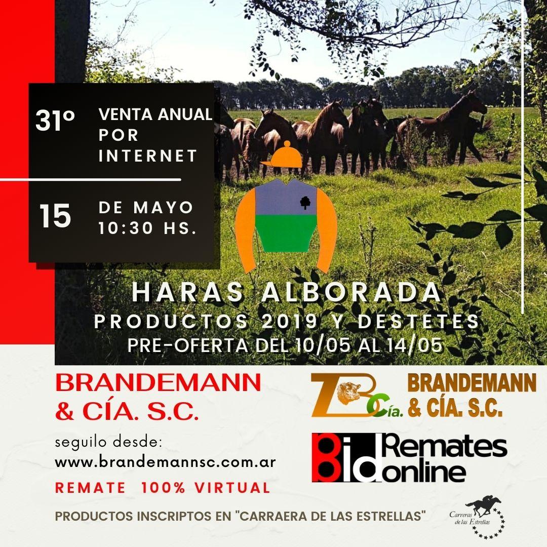 31º Venta Anual- Haras Alborada SC