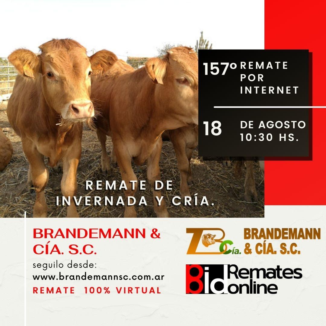 Remate Nº 157 - Brandemann & Cía. S.C